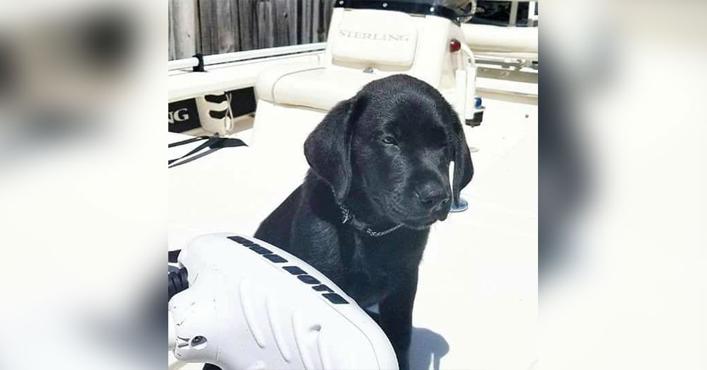 Source: Facebook/Labrador Retriever Rescue of Florida - South Florida District Ponce the dog was killed in 2017.