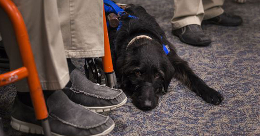 Source: Joint Base Charleston Air Force veteran Rick Hayes' service dog, Malachi.