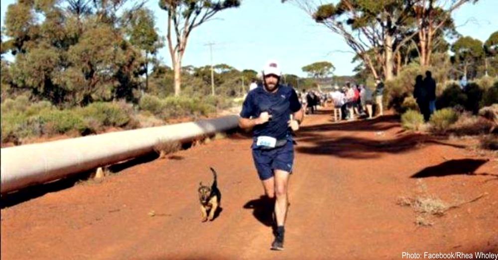 stray-dog-runner-1