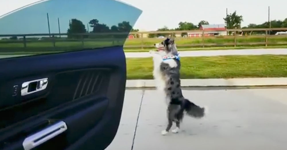 Source: Facebook/Unstoppable K9's Supra dances on her hind legs.