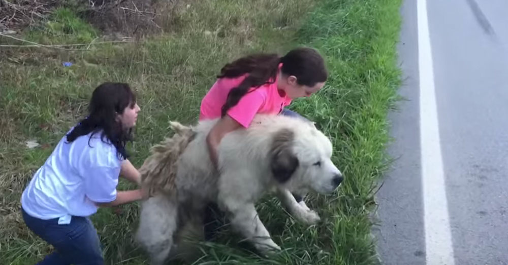 Source: YouTube/Melissa Ringstaff The Ringstaff's found the dog on the side of the road.