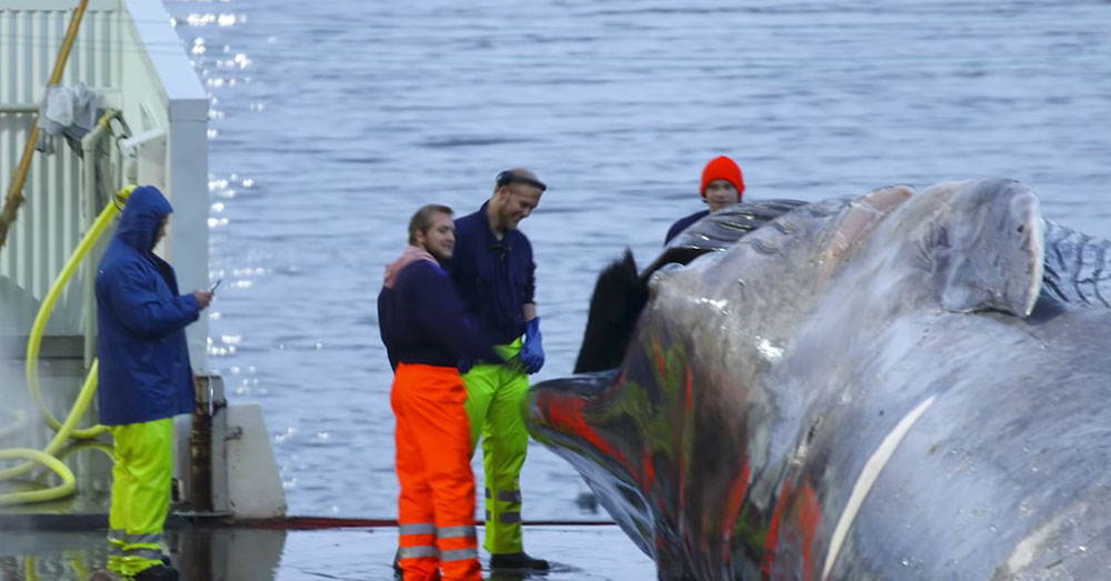 Source: YouTube/Sea Shepherd Fisherman gather around the whale.