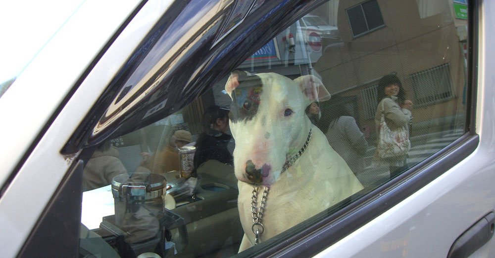Source: flickr/Jeremy Eades Richard Hill believed he was doing the right thing rescuing two dogs from a locked car in a Walmart parking lot.