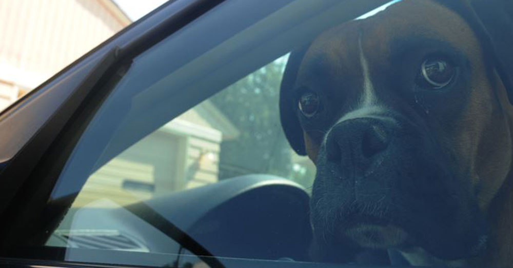 Source: U.S. Air Force A dog in Wigan was left in a hot car by someone who didn't return for hours.