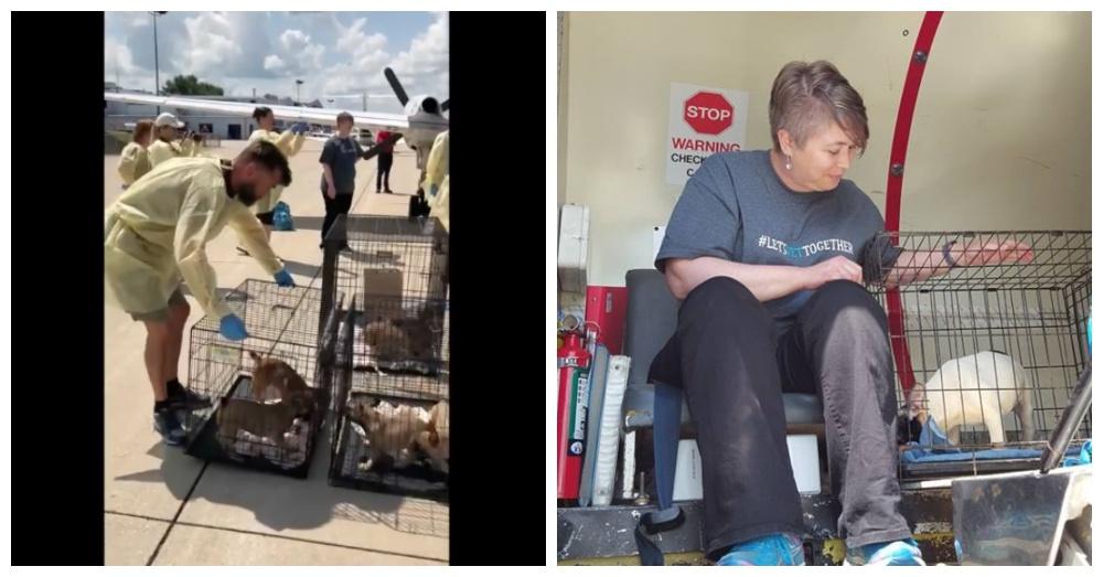 Screen Shots: Facebook/Chicago French Bulldog Rescue