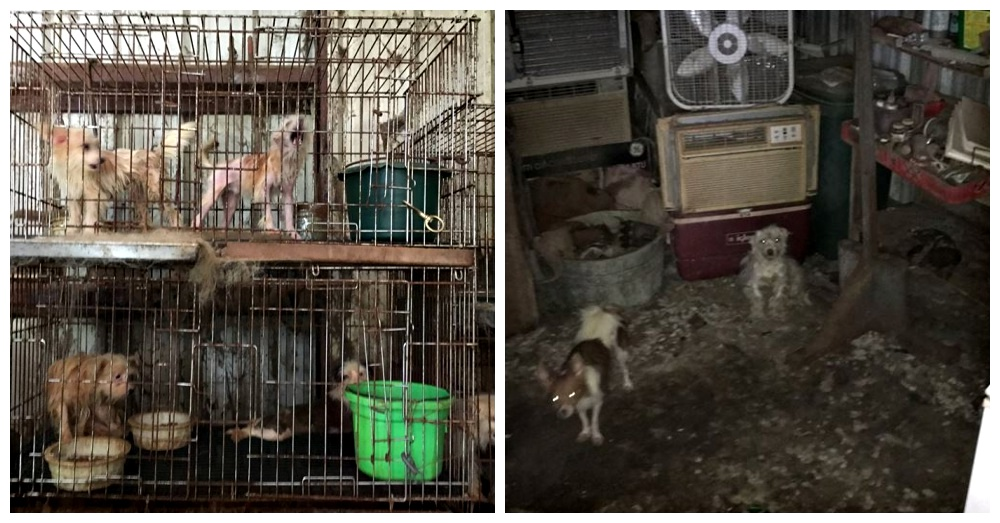 Photos: Facebook/Houston Humane Society