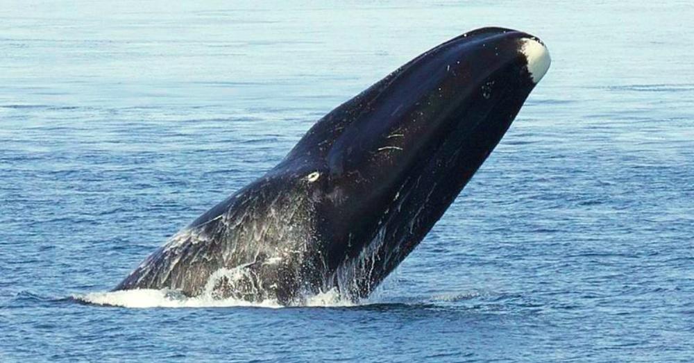 Photo Credit: Wikimedia Commons/Bering Land Bridge National Preserve