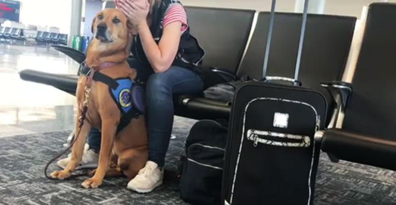 Panic Attack Service Dog
