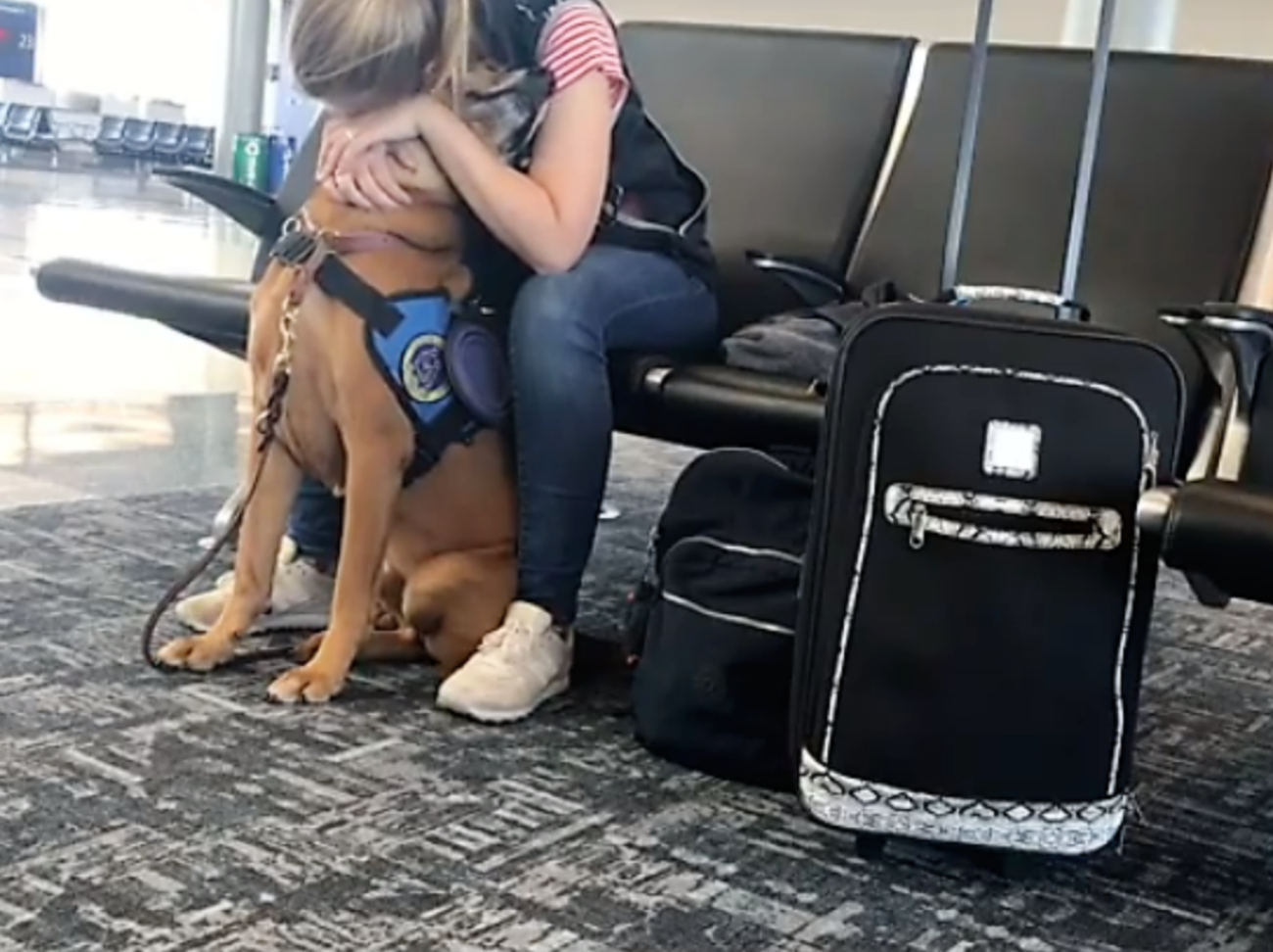 Panic Attack Service Dog 2