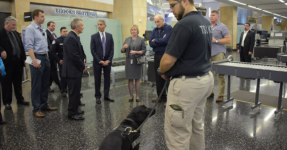 Source: Wikimedia Commons TSA dogs are often adepts at sniffing out drugs and explosives, but not everyone makes the cut.