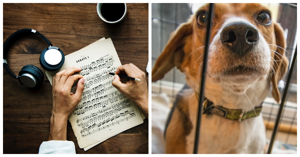 canine-lullabies-2