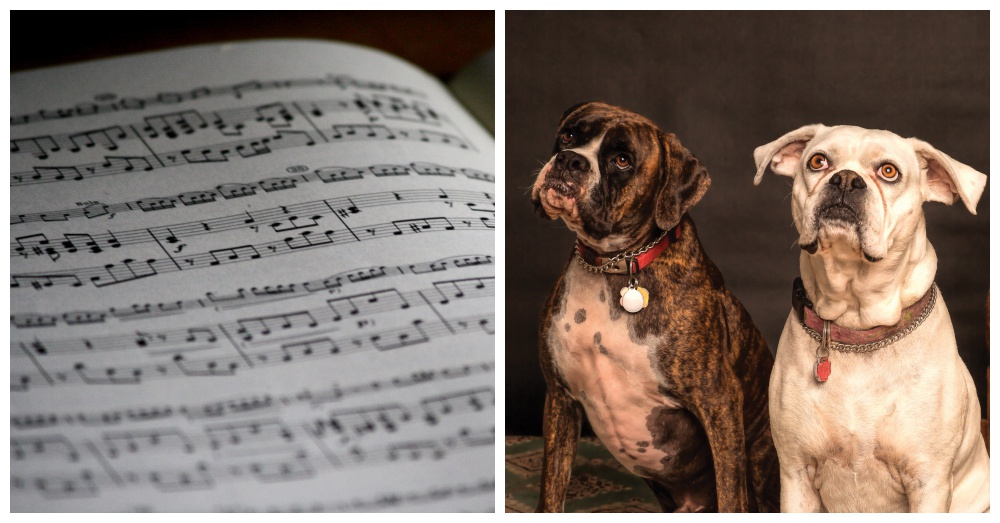 canine-lullabies-4