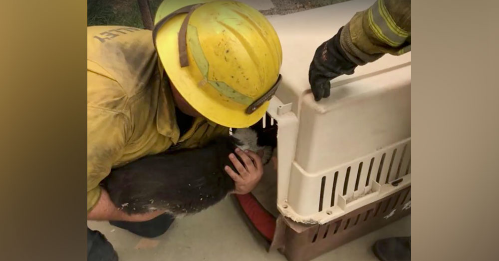 Source: Facebook/Brian Mullahy Firefighters rescued the cat and chicken and transported them to safety.
