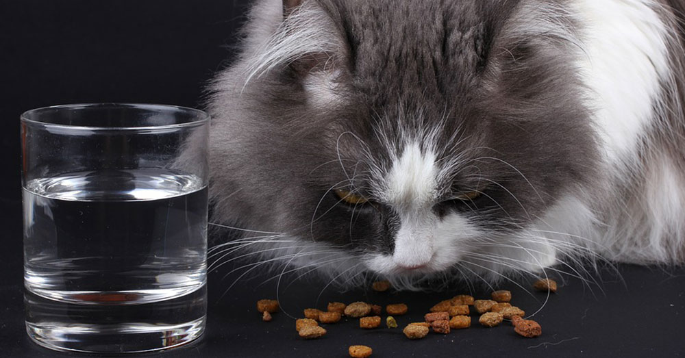 Source: Pixabay Cats need a number of nutrients to survive.