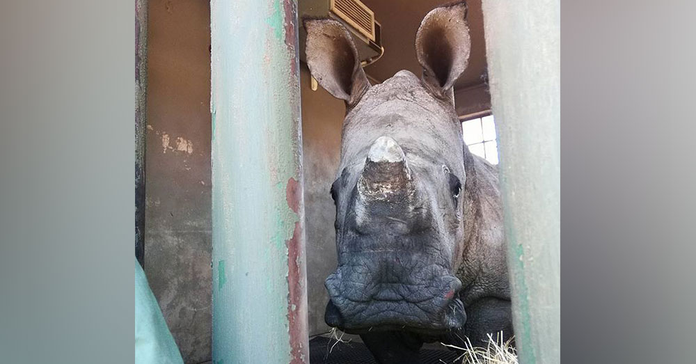 Source: Facebook/The Rhino Orphanage Davi cried at The Rhino Orphanage after he was brought there by rescuers.