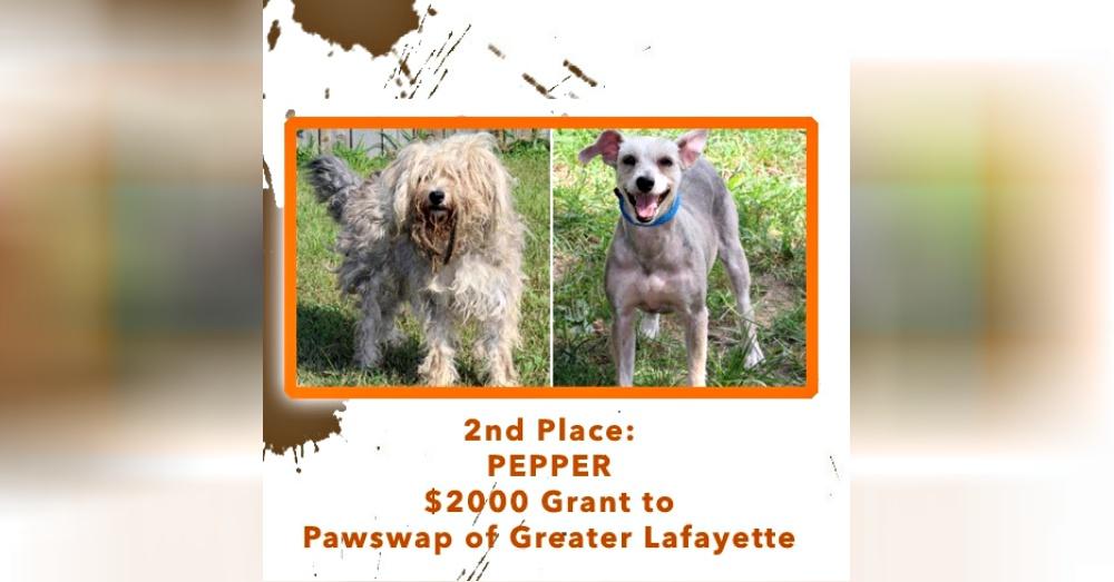 Photo: Facebook/Wahl Pets