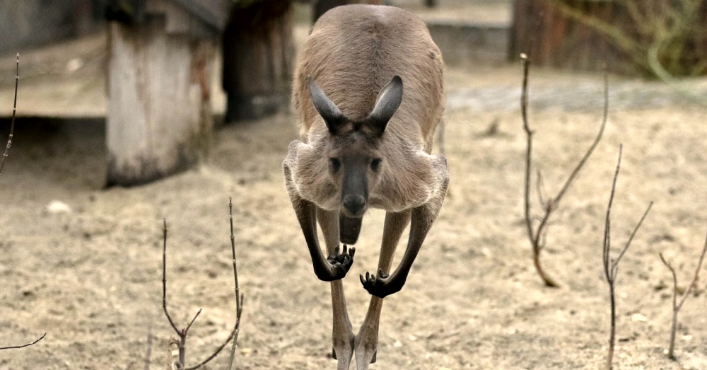 farmers-vs-kangaroos-1