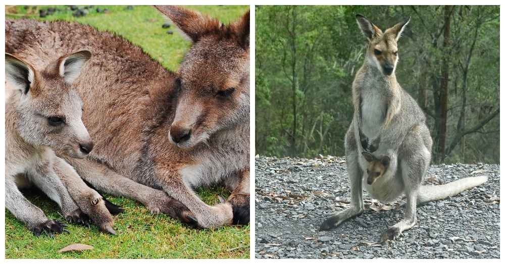 farmers-vs-kangaroos-2