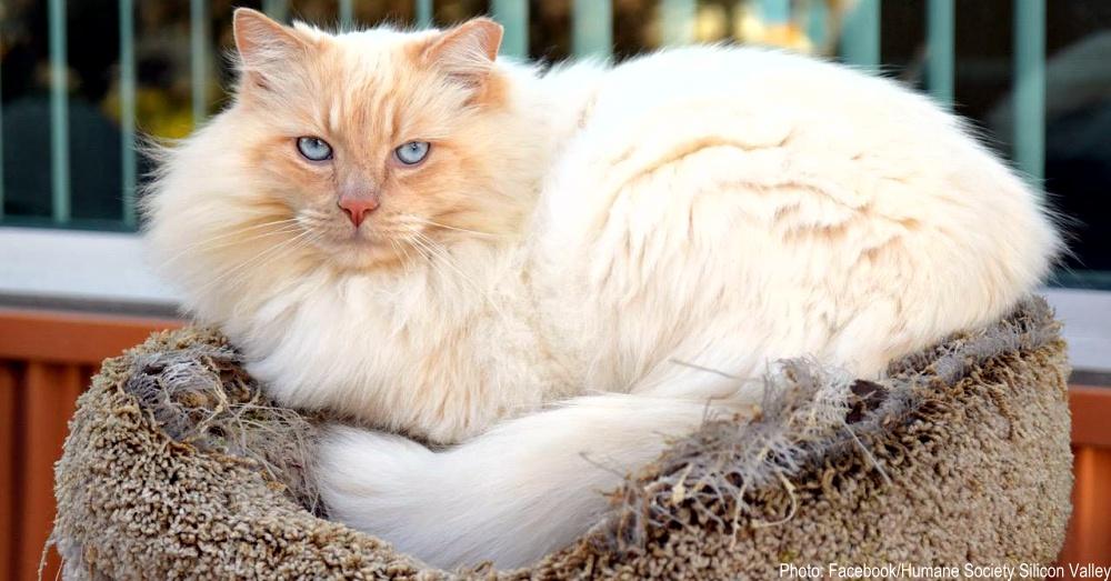 feral-cat-garden-1