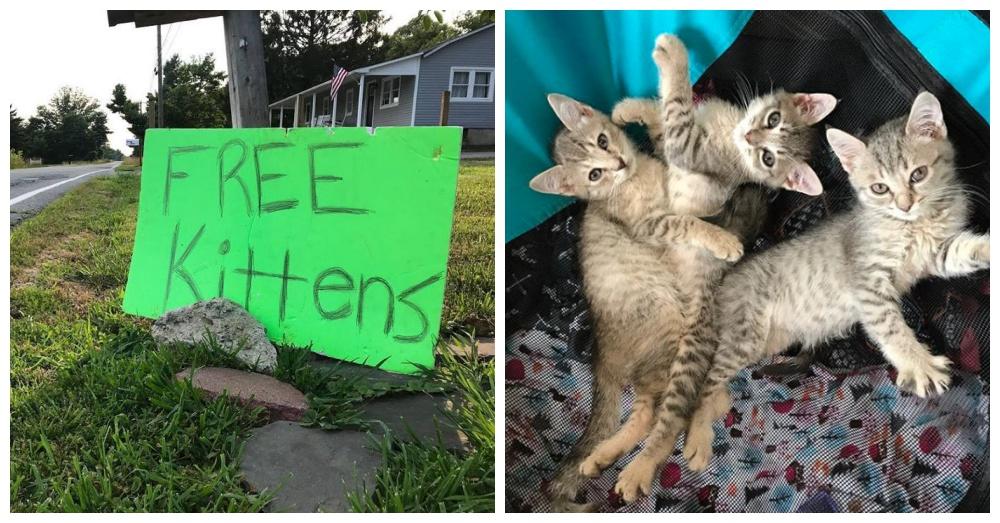Photos: Facebook/Kitten Lady