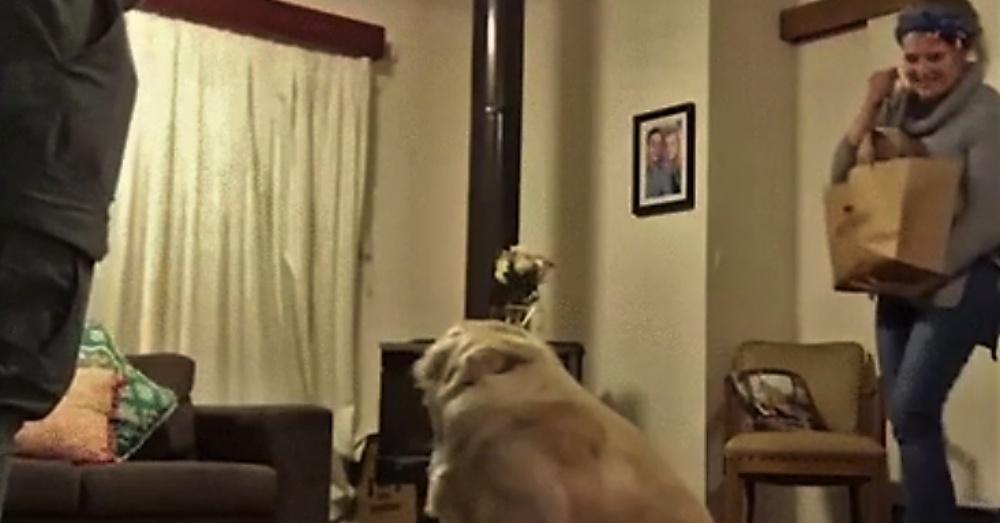 gr-sees-puppy_1000x523
