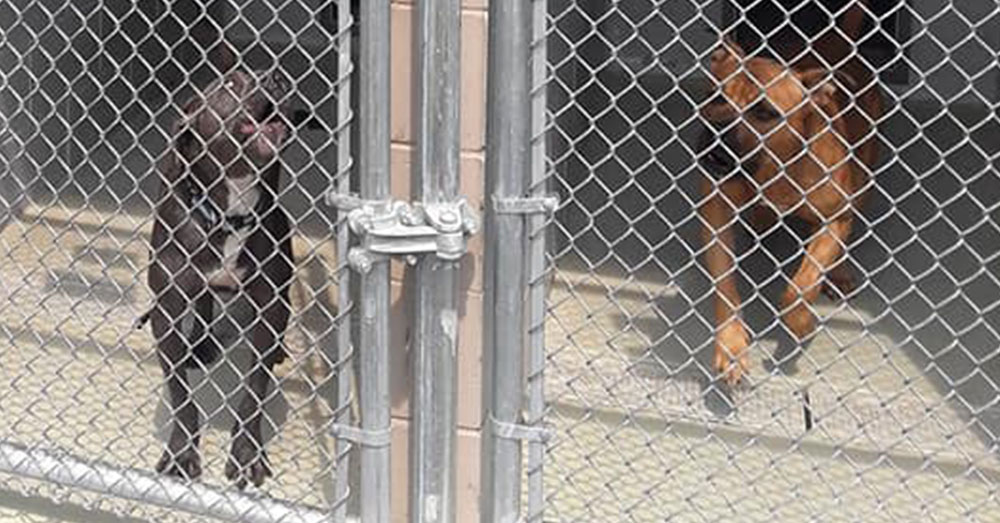 Source: Facebook/Reformers - Advocates for Animal Shelter Change in NJ The Hamilton Township Animal Shelter has come under scrutiny for putting pets down, on-demand, for $100.