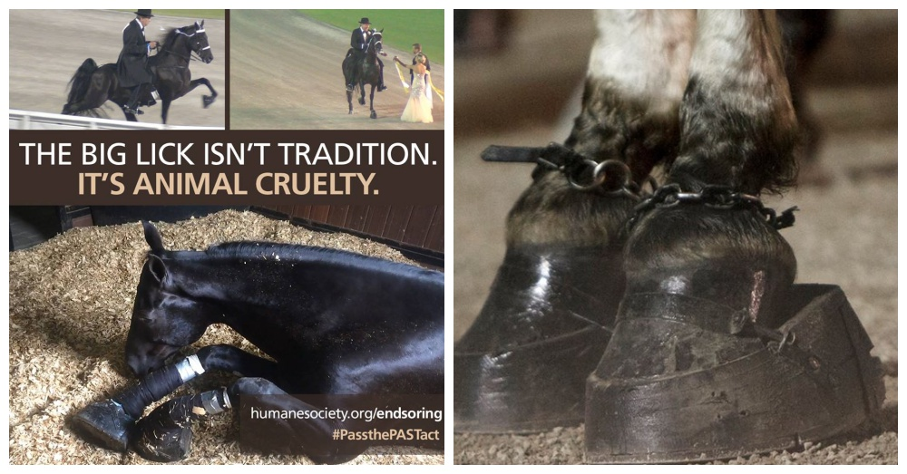 Photos: Facebook/The Humane Society of the United States - Equine Protection