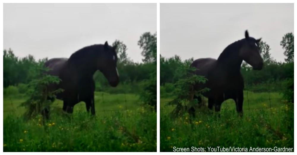 im-dancing-horse-1