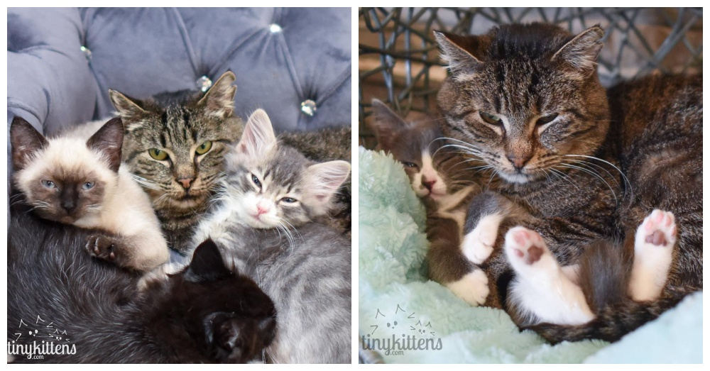 Photos: Facebook/Grandpa Mason and his kittens