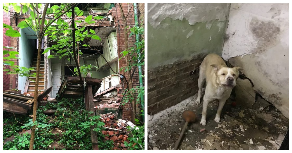 Photos: Facebook/Stray Rescue of St. Louis