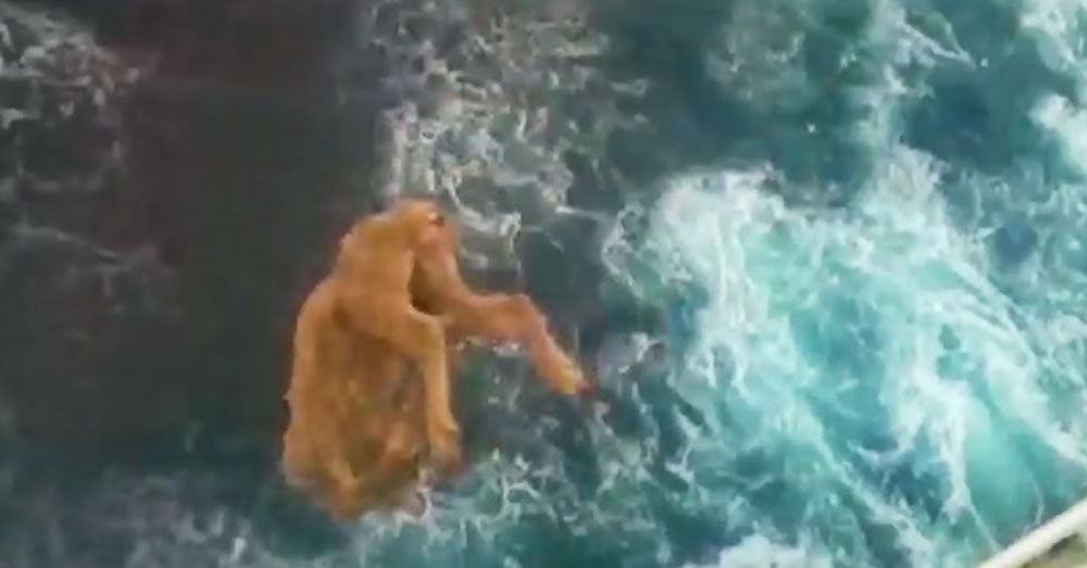 Source: YouTube/60 Minutes Australia Some sheep are slaughtered aboard and thrown off the ship.