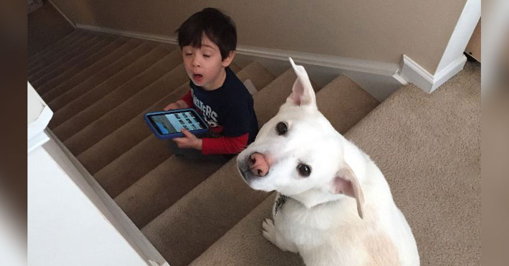 Source: GoFundMe The young boy cried himself to sleep when he learned what had happened to his dog.