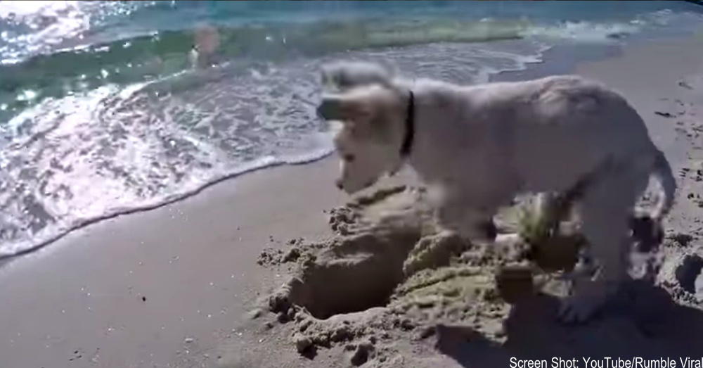 puppy-vs-ocean-feature