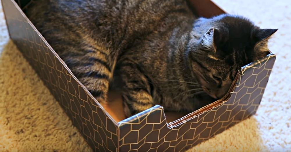 Photo: YouTube/Purrfect Cat Box