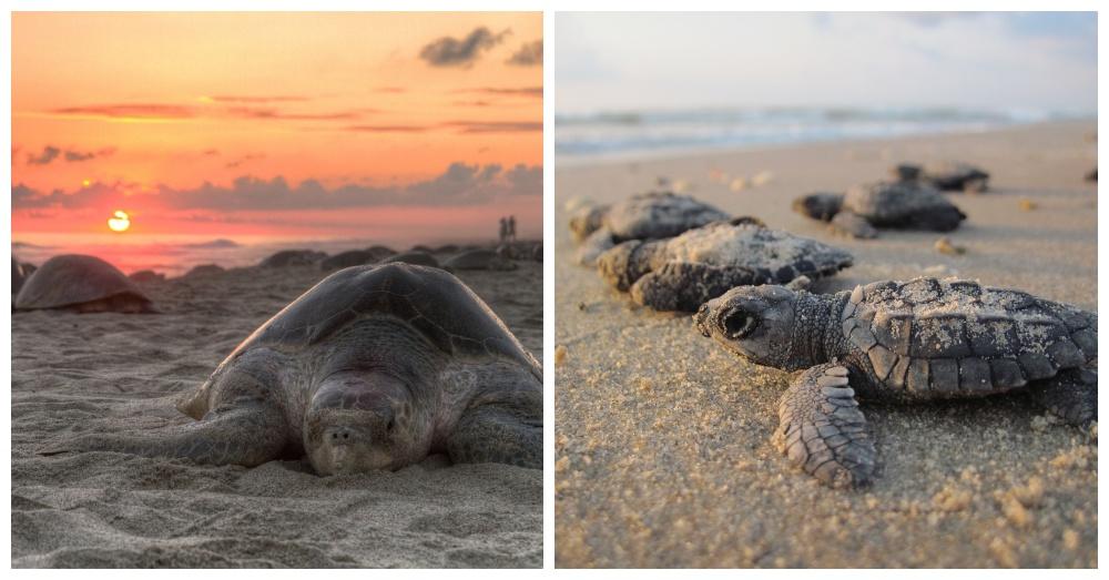 sea-turtle-poachers-2