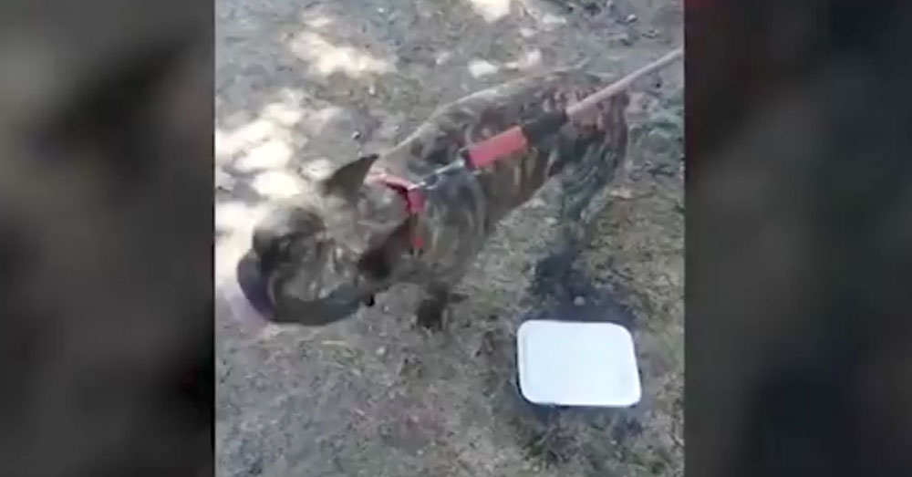 Source: YouTube/News Confused Even after the dog was rescued, it continued to vomit uncontrollably,