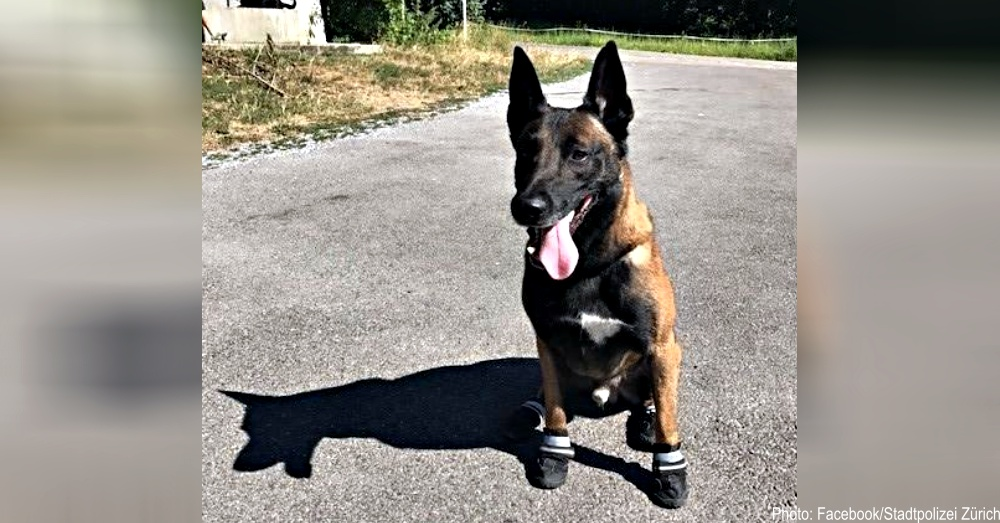 swiss-police-dogs-1