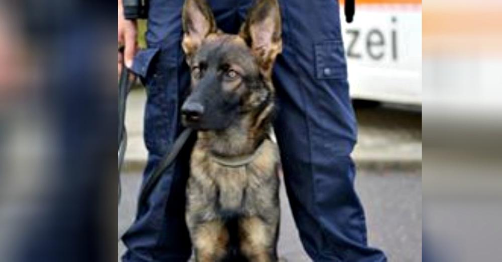 Photo: Facebook/Stadtpolizei Zürich