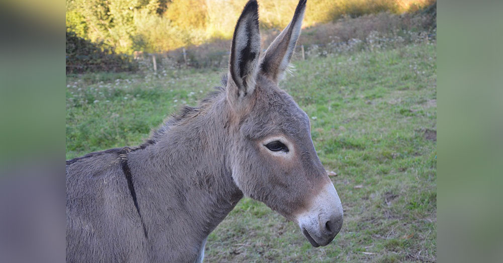 Source: Pixabay This is a real donkey.