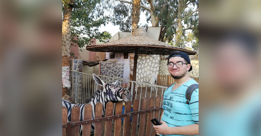 Source: Mahmoud Sarhan Mahmoud Sarhan caught this picture of what seems to be a painted donkey at a zoo in Cairo, Egypt.