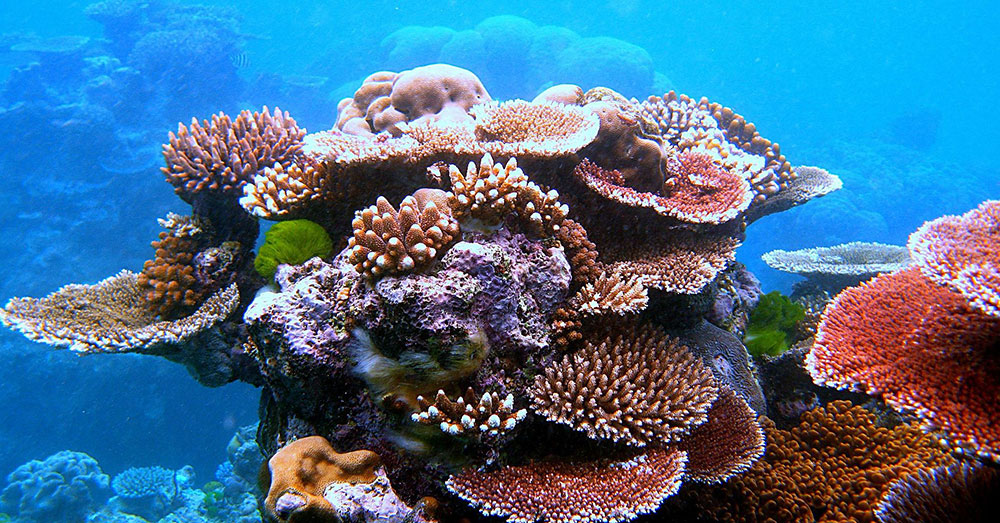 Source: Wikimedia Commons There may be hope for this reef yet!