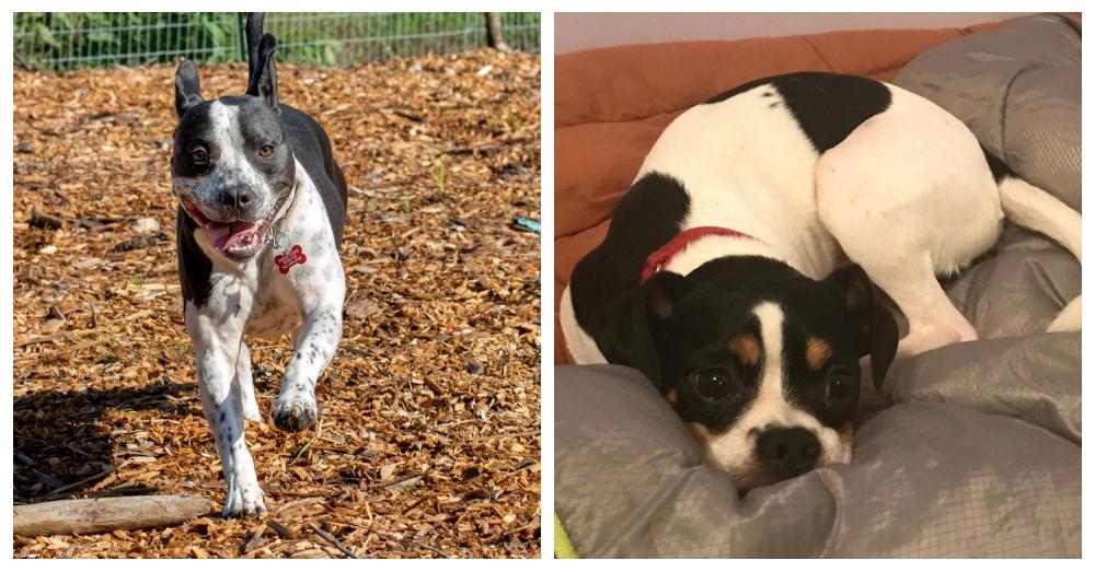 Photo: Facebook/Three Paws Animal Rescue