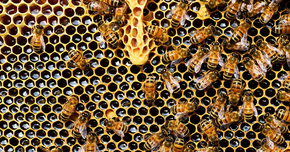 Source: PxHere Bees have been dyiong off in record numbers over the last decade.