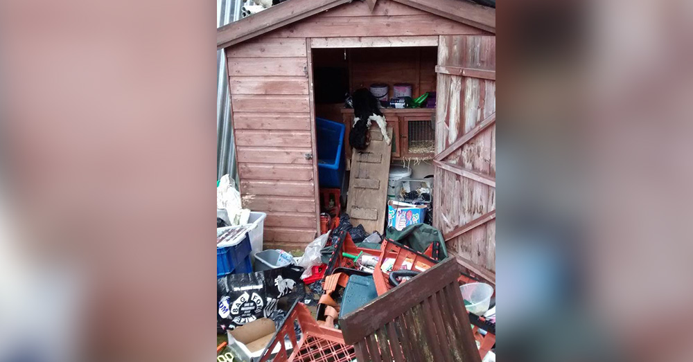 Source: Crimes in the UK & World News Bieber had no place to run or play except on trash. in a small shed.
