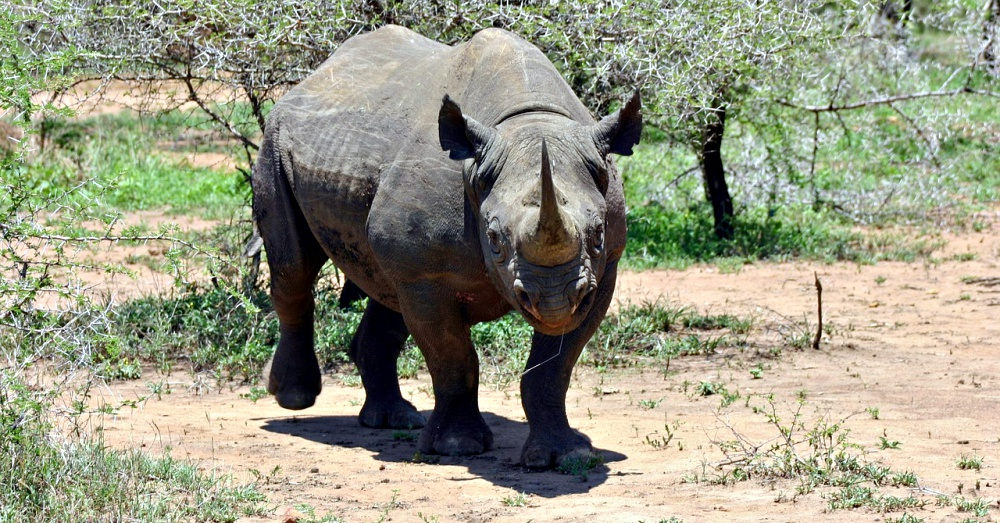 black-rhino-import-2