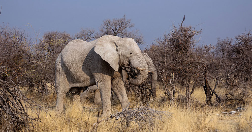 Source: Max Pixel 87 elephants were discovered killed on protected lands in Botswana.