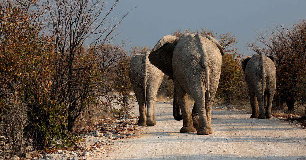 Source: Max Pixel 84 percent of all African elephants live on legally protected lands.