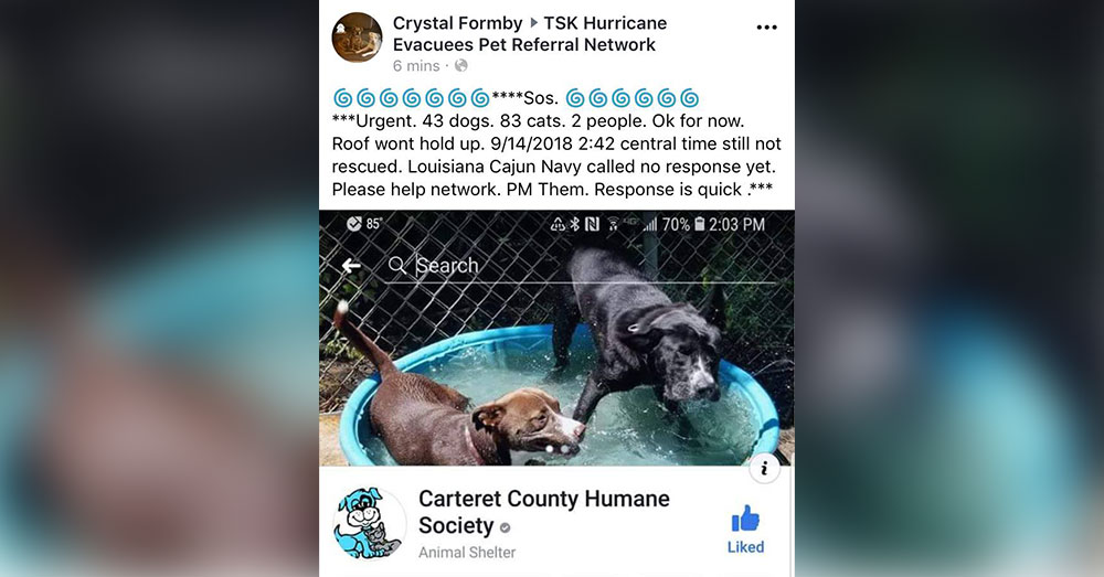 Source: Facebook/TSK Hurricane Evacuees Pet Referral Network A message from the Carteret County Humane Society sent out on Friday, Sept. 14.