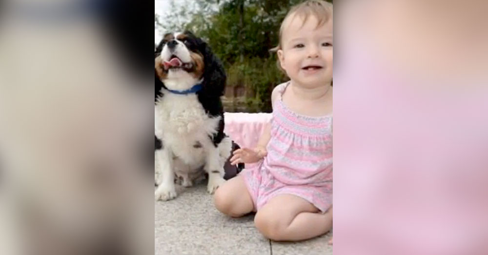 Source: YouTube/NZ NEWS Louis' barking helped save Chloe.