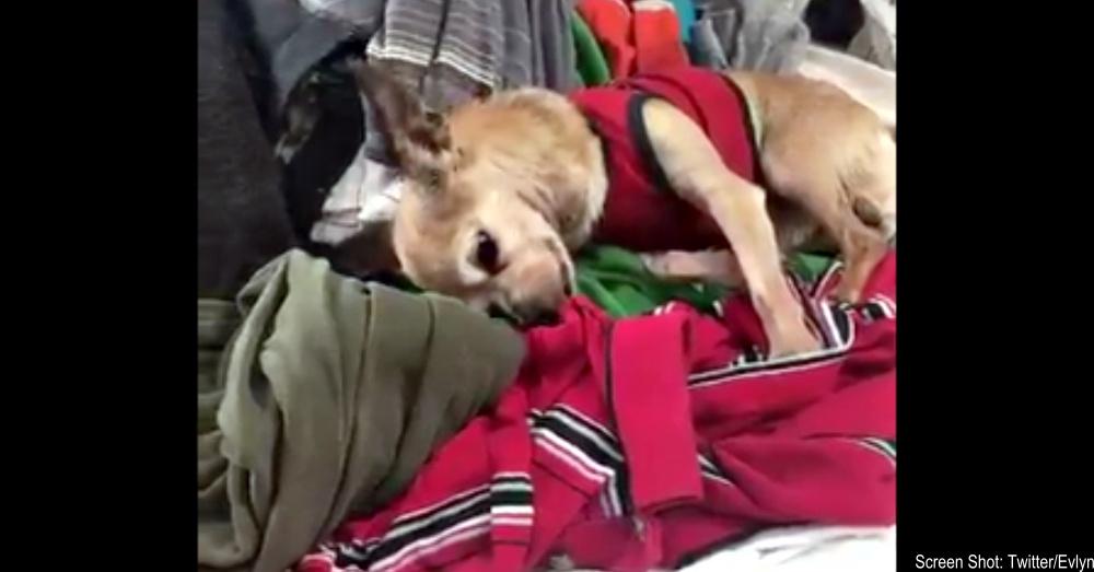 dog-snuggles-clothes-1